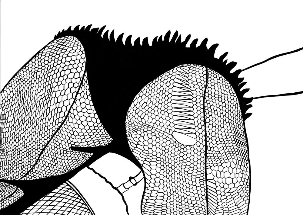 Kora Junger – #002_10_09_1110, 59,4 x 84 cm, ink on paper, 2009